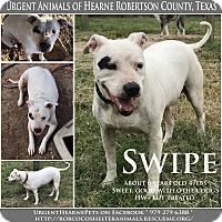 Adopt A Pet :: Swipe - Hearne, TX