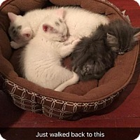 Adopt A Pet :: Kamri, Fisher & Rayna - Morgantown, WV