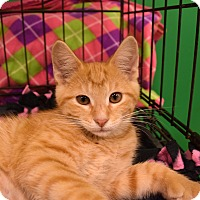 Adopt A Pet :: Pollux - Flushing, MI