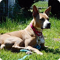 Adopt A Pet :: Nala - Freeport, NY