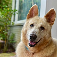 Adopt A Pet :: Benson- Urgent please help!!! - San Diego, CA