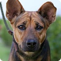 Adopt A Pet :: Finlandia - San Diego, CA