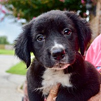 Adopt A Pet :: Lottie-ADOPTED - Springfield, MA