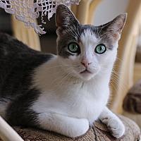 Adopt A Pet :: Gilly - Toronto, ON
