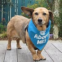 Adopt A Pet :: Bootsie - Pacific Grove, CA