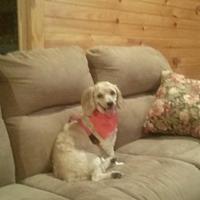 Adopt A Pet :: Teela- McDowell - Asheville, NC
