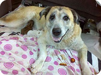 Great Pyrenees/Shepherd (Unknown Type) Mix Dog for adoption in Adamsville, Tennessee - Tessa