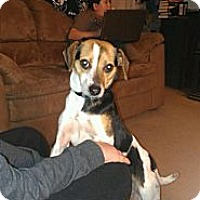 Adopt A Pet :: Babe - McKeesport, PA
