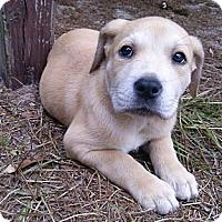 Adopt A Pet :: 'TRIXIE' - Brooksville, FL