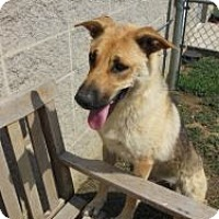 Adopt A Pet :: Emma - Justin, TX