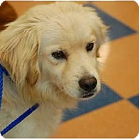 Adopt A Pet :: Snoopy - San Diego, CA