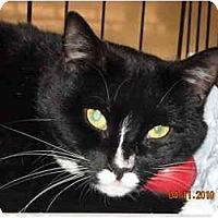 Adopt A Pet :: Adrianna - Riverside, RI