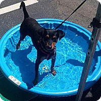 Adopt A Pet :: Collen - Tustin, CA