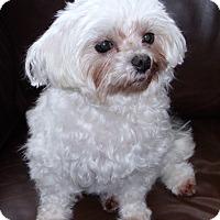 Adopt A Pet :: Tiffany #2 - Orange, CA