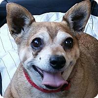 Adopt A Pet :: Daisy - Creston, CA