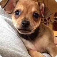 Adopt A Pet :: Timber - Gainesville, FL
