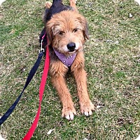 Adopt A Pet :: Winnie ~ Adoption Pending - Youngstown, OH