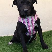 Adopt A Pet :: Jimbo - San Diego, CA