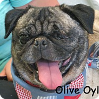 Adopt A Pet :: Olive Oyl - Warren, PA