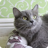 Adopt A Pet :: Carebear - Red Wing, MN