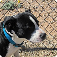 Adopt A Pet :: Mindy - Sierra Vista, AZ