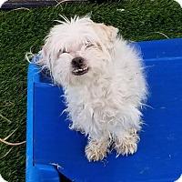 Adopt A Pet :: Krimson - Las Vegas, NV