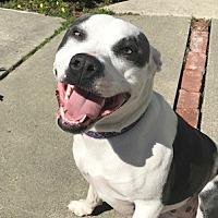 Adopt A Pet :: Bea - Sunnyvale, CA