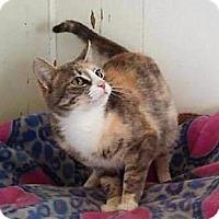 Adopt A Pet :: Sadie - Corinne, UT