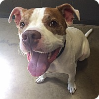 Adopt A Pet :: Leo - Jackson, MI