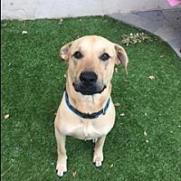 Adopt A Pet :: Skyler - Courtesy Listing - Oakley, CA