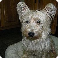 Adopt A Pet :: Layla - Mt Gretna, PA