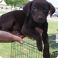 Adopt A Pet :: Otis - Glenpool, OK