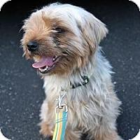 Adopt A Pet :: Kiko - Woodbridge, VA