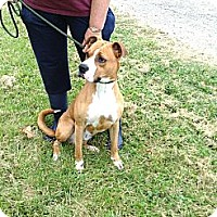 Adopt A Pet :: #346-13 RESCUED! - Zanesville, OH