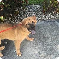 Adopt A Pet :: Yara - Dix Hills, NY