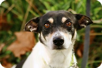 Terrier (Unknown Type, Small) Mix Dog for adoption in Portland, Oregon - Lehua