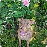 Adopt A Pet :: Skyler - Shrewsbury, NJ