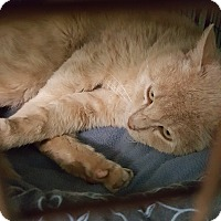 Adopt A Pet :: Benedict - Cody, WY