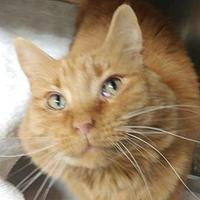 Adopt A Pet :: Frankie - Menands, NY