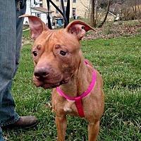 Adopt A Pet :: Pisces - Benton, PA