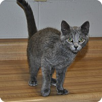 Adopt A Pet :: Skye - Parsons, KS