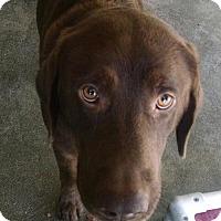 Adopt A Pet :: Rio - Pembroke, GA