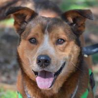 Adopt A Pet :: Grady - Wimberley, TX