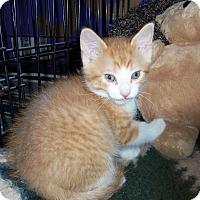 Adopt A Pet :: SAMPSON - Medford, WI