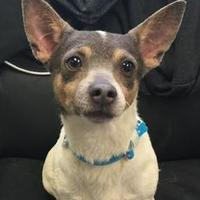 Adopt A Pet :: Posie - Visalia, CA