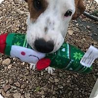 Adopt A Pet :: Kevin - Waynesboro, TN