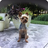 Adopt A Pet :: Trinity - West Milton, PA