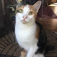 Adopt A Pet :: Gracie - Edinburg, PA