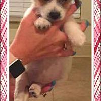 Adopt A Pet :: Ashlyn - Ringwood, NJ