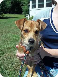 Dachshund/Jack Russell Terrier Mix Dog for adoption in New Milford, Connecticut - Charly